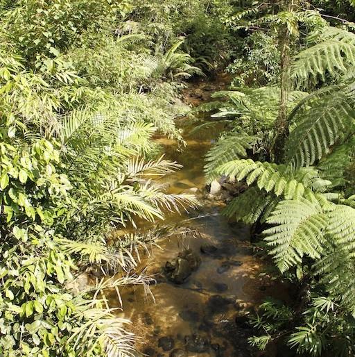 The stream below