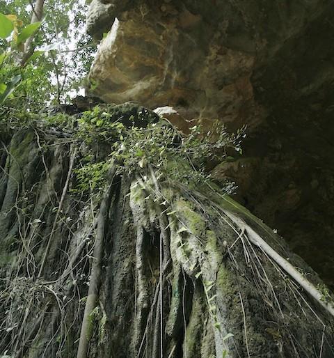 Lush vegetation at Srakaew cave