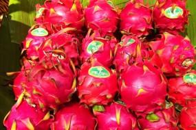 The dragon fruit