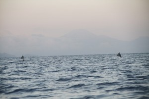 Silhouette of Java volcanoes with jumping dolphins