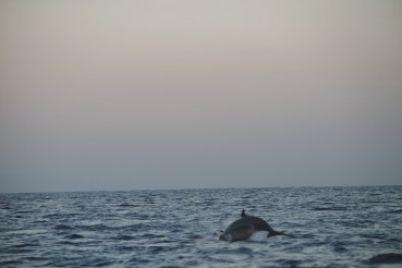 Dolphin watching – North Bali
