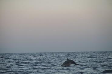 Dolphin watching – North Bali