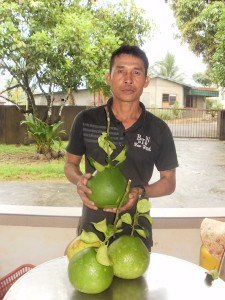 Malaysian pomeloes