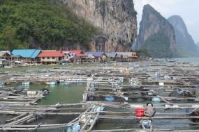 Adventure in the Phang Nga bay
