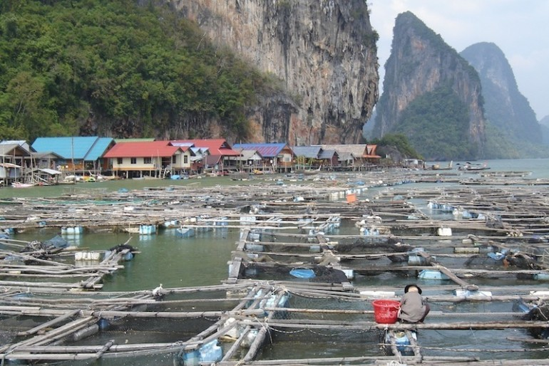 Koh Panyi fish farms