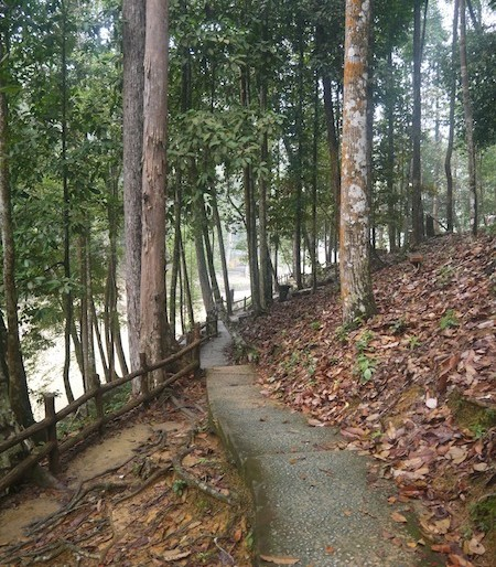 Pedestrian walk in the jungle