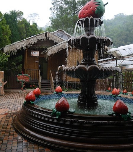 Strawberry fountain