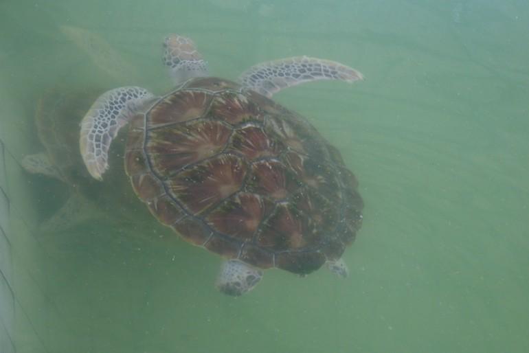 Meeting Mr. Turtle