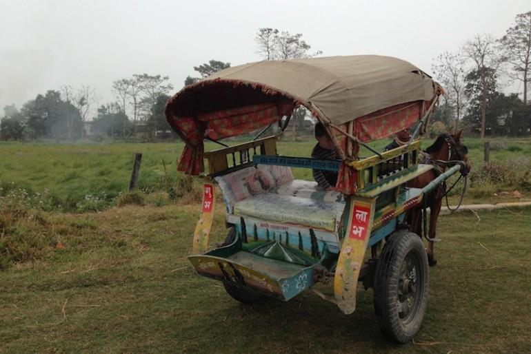 Sauraha horse truck