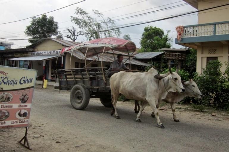 Sauraha street, Chitwan