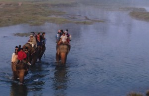 Our elephants wading the river