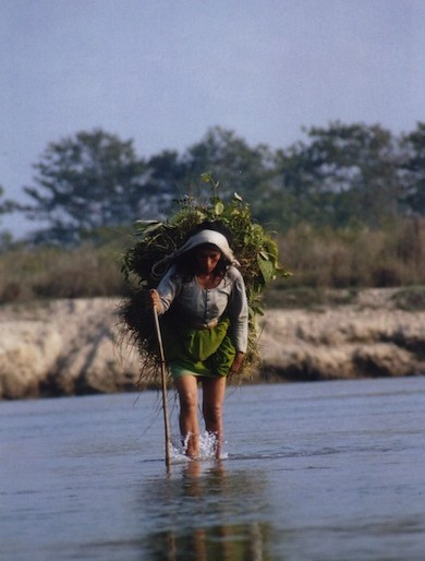 A Chitwan woman crosses the river carrying grass
