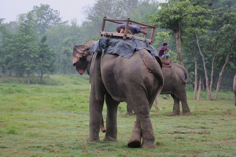 elephants before the ride