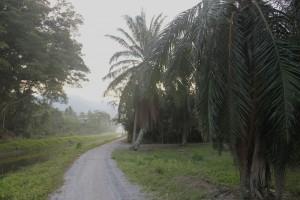 Misty morning in Balik PUlau