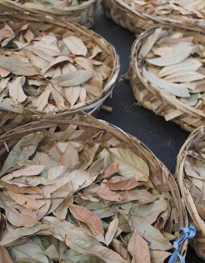 Nutmeg leaves drying for making tea