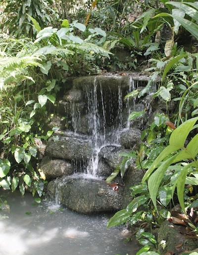 Tropical Spice Garden water streams