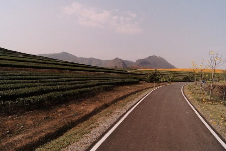 Singha Park cycling lane