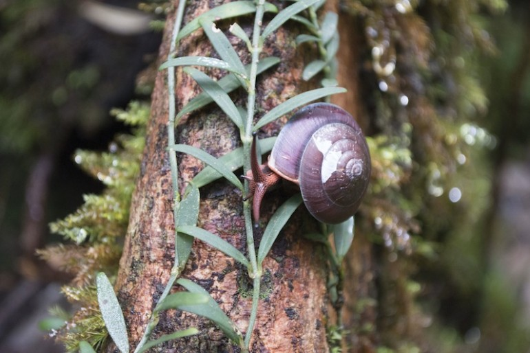 Snail on a tree trunk