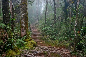 The summit trail at Kinabalu National Park