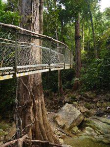 The suspended bridge