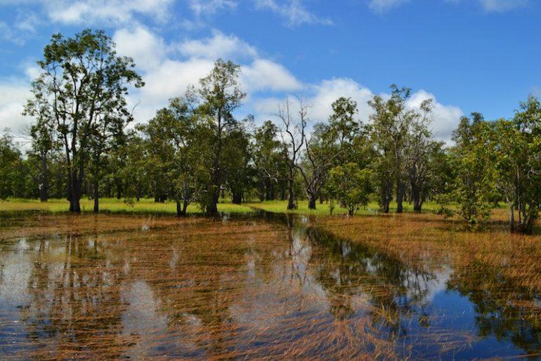 Peat swamp forest at Sebangau National Park