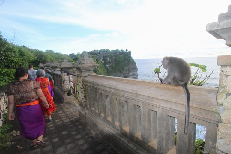 Cheeky monkey at Uluwatu temple