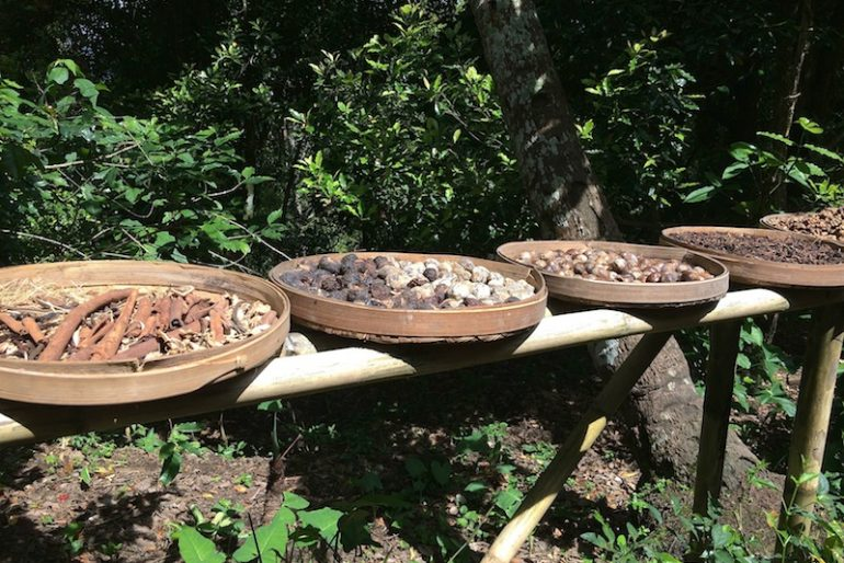 Local produce drying in the sun: cocoa and coffee