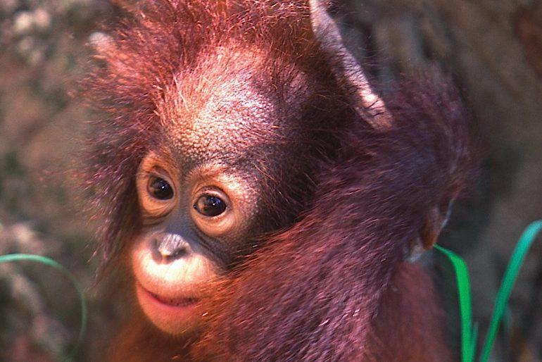 One of the Sandakan forest inhabitants