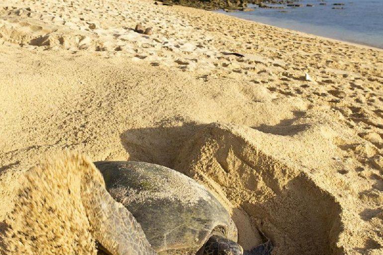 Turtle Island National Park