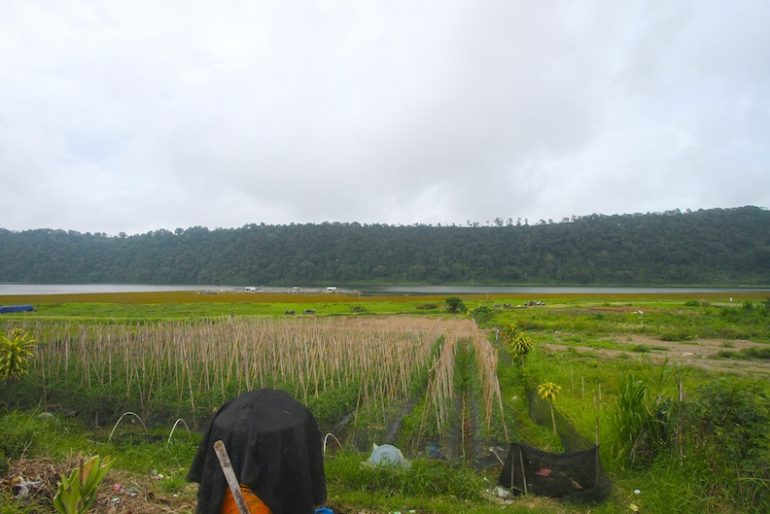Vegetable farming on the shores of Lake Buyan