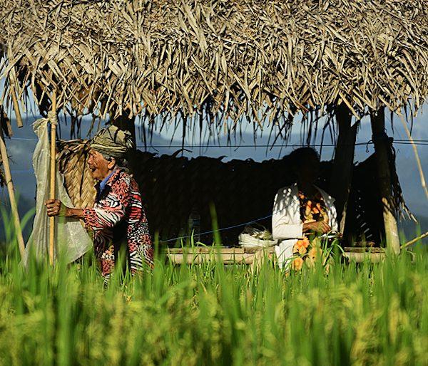 Local elder at Munduk coffee plantations