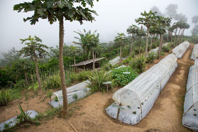 Coffee Plantations at Munduk Moding