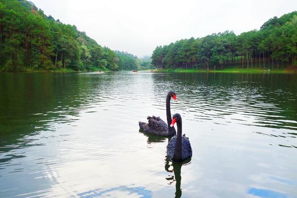 Flora and fauna at Pang Ung