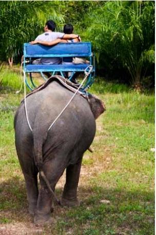 Romantic times aboard an elephant