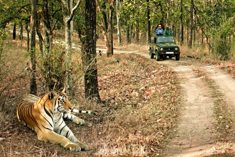 Bandhavgarh National Park and Tiger Reserve