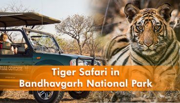Tiger Safari in Bandhavgarh National Park