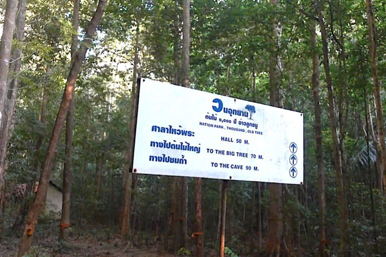 The banner indicating the oldest tree in Thailand