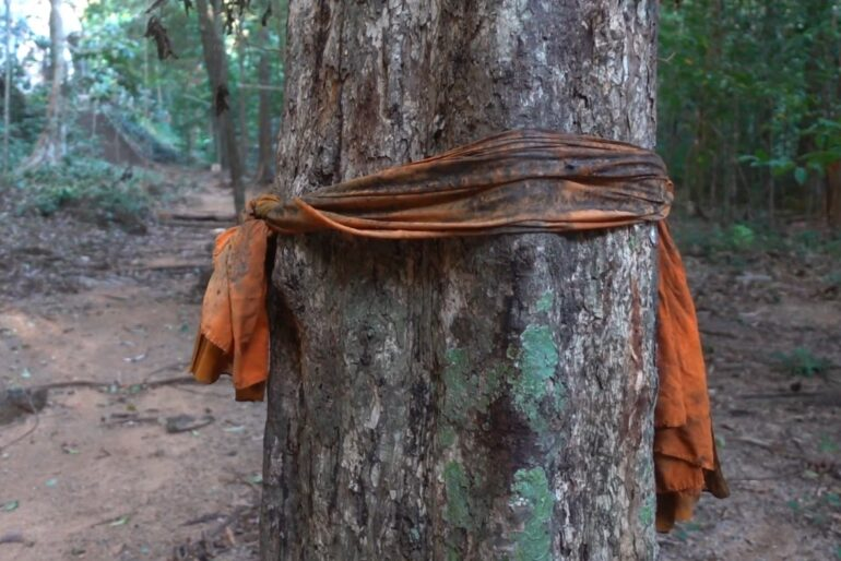 Trees are wrapped in sacred cloths